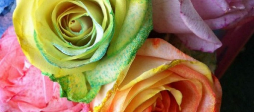 How to make tie dye rainbow roses for How to make tie dye roses