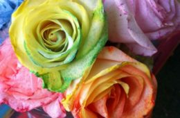 Tie-dye Roses Tutorial by Kathy Cano-Murillo, CraftyChica.com