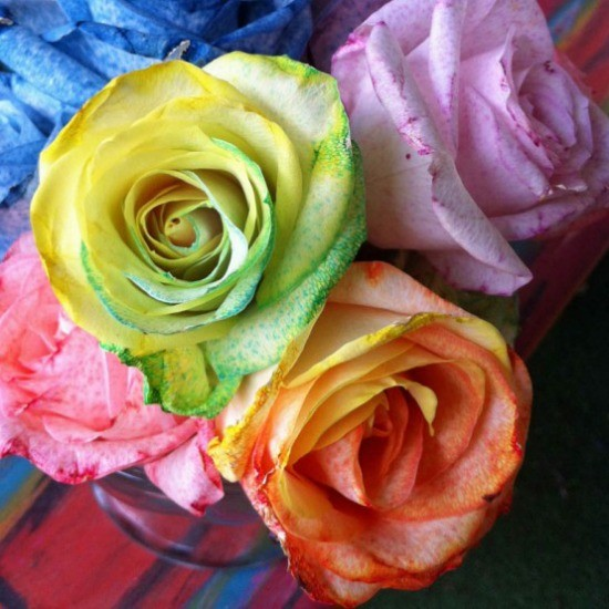Make tie dye rainbow roses the crafty chica for How to color roses rainbow