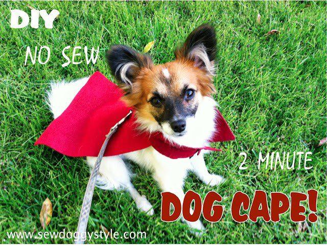 no sew dog cape